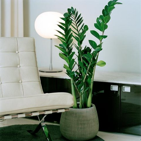 301 moved permanently - Plantas de interior verdes ...
